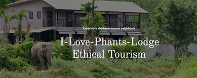 I-Love-Phants-Lodge is a retreat where people can stay near to wildlife and enjoy the peace and quiet of the natural surroundings.